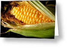 Summer Corn Xl Farm Nature Harvest Greeting Card