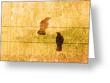 Summer Crows Greeting Card