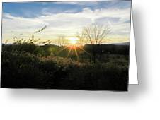 Summer Day Going Into Evening.  Greeting Card