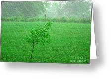 Summer Downpour Greeting Card
