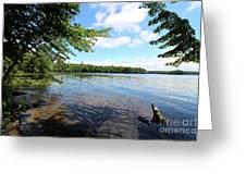 Summer Dreaming On Lake Umbagog  Greeting Card