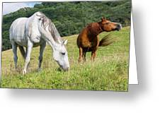 Summer Evening For Horses Greeting Card