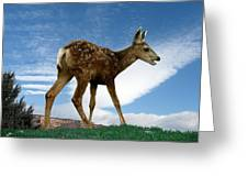 Summer Fawn Greeting Card