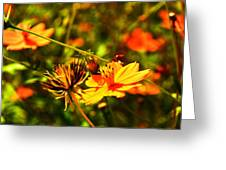 Summer Field Greeting Card