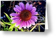 Summer Flower In Fading Light Greeting Card