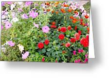 Summer Flowers 3 Greeting Card