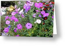 Summer Flowers 5 Greeting Card