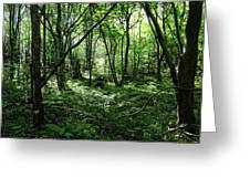 Summer Forest On A Sunny Day Greeting Card