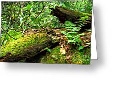 Summer Forest Greeting Card