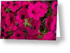 Summer Glamor Greeting Card