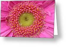 Summer Glory Greeting Card