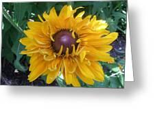 Summer Glow Greeting Card