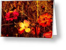 Summer Glow On Flowers Greeting Card