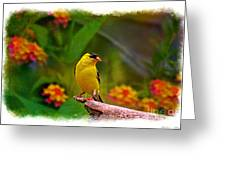 Summer Goldfinch Greeting Card