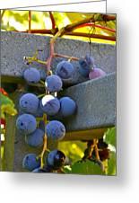 Summer Grapes Greeting Card