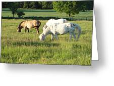 Summer Grazing Greeting Card