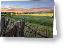 Summer Hay Bales  Greeting Card