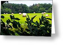 Summer Hay Greeting Card
