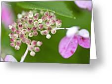 Summer Hydrangea 3 Greeting Card