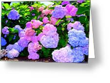 Summer Hydrangeas #2 Greeting Card