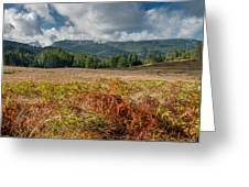 Summer In The Bald Hills 1 Greeting Card
