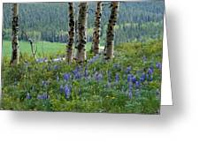 Summer In The Bighorns Greeting Card