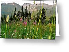 Summer In The Mountains Greeting Card