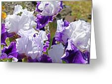 Summer Iris Garden Art Print White Purple Irises Flowers Baslee Troutman Greeting Card