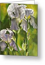 Summer Irises Greeting Card