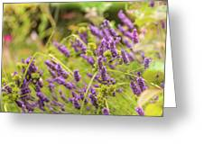 Summer Lavender In Lush Green Fields Greeting Card