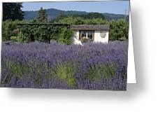 Summer Lavender Greeting Card