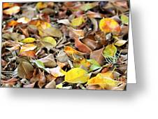 Summer Leaves For Fall Greeting Card