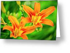 Summer Lilies Greeting Card