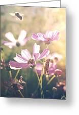 Summer Love Greeting Card
