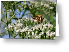 Summer Lovin Greeting Card