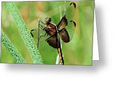 Summer Dragonfly Greeting Card