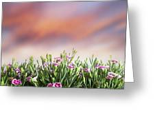 Summer Meadow Flowers In Grass At Sunset. Greeting Card