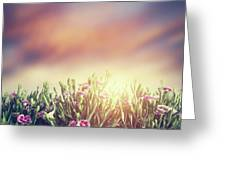 Summer Meadow Flowers In Grass At Sunset. Vintage Greeting Card