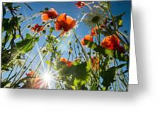 Summer Meadow Greeting Card