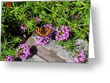 Summer Moment Greeting Card