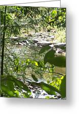 Summer Mountain Creek Greeting Card