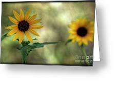 Summer Of Sunflowers  Greeting Card