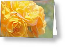Golden Yellow Roses In The Garden Greeting Card