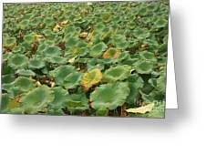 Summer Palace Lotus Pond Greeting Card