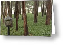 Summer Palace Trees And Lamp Greeting Card