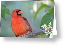 Summer Perch Greeting Card