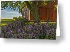 Summer Phlox Greeting Card