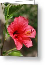Summer Pink Greeting Card