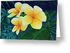 Summer Plumeria Greeting Card