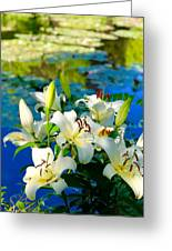 Summer Pond French Lilies Greeting Card